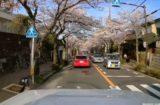 桜並木で春を実感