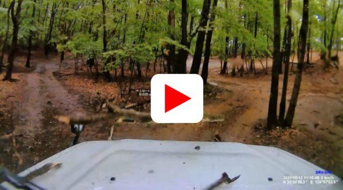ブロンコで落木体験(動画)